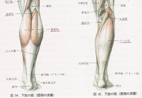 leg-m.jpg